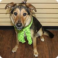 Adopt A Pet :: Cybil-Pending! - Detroit, MI