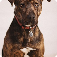 Adopt A Pet :: Toni - Portland, OR