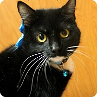 Adopt A Pet :: ANA - Tiffin, OH