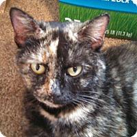 Adopt A Pet :: Ciera - Bedford, VA