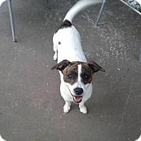 Adopt A Pet :: Allie - Albemarle, NC