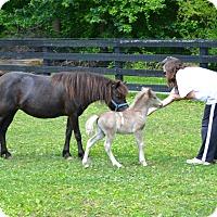 Adopt A Pet :: Thunder & Lightening - West Grove, PA