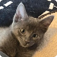 Adopt A Pet :: Ilene - Austin, TX