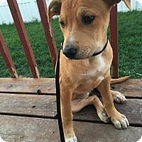 Adopt A Pet :: Marigold - Salt Lake City, UT