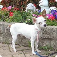 Adopt A Pet :: Ometta - West Chicago, IL