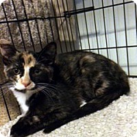 Adopt A Pet :: Tilly - Overland Park, KS