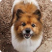 Adopt A Pet :: Xander - Phoenix, AZ