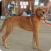 Adopt A Pet :: Charlie - Leslie, AR
