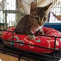 Adopt A Pet :: Oliver - Fallbrook, CA
