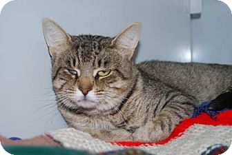 Domestic Shorthair Cat for adoption in Port Hope, Ontario - Freckles