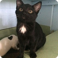 Adopt A Pet :: Donna - Savannah, GA