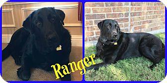 Labrador Retriever Mix Dog for adoption in Ft Worth, Texas - Ranger