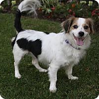 Adopt A Pet :: RACHEL - Newport Beach, CA