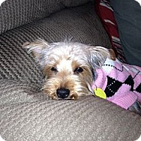 Adopt A Pet :: Abby (Michigan) - Phoenix, AZ