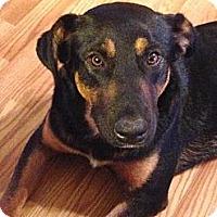 Adopt A Pet :: Roonie - Homewood, AL