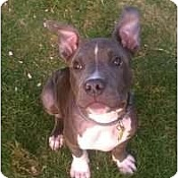 Adopt A Pet :: Billy - Justin, TX