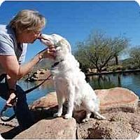 Adopt A Pet :: Jett - Mesa, AZ