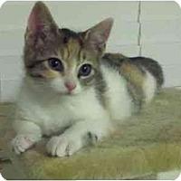 Adopt A Pet :: Penelope - Davis, CA