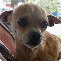 Adopt A Pet :: Pam URGENT - San Diego, CA