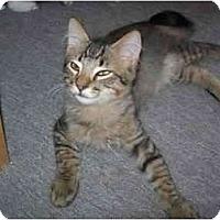 Adopt A Pet :: AJ - Davis, CA