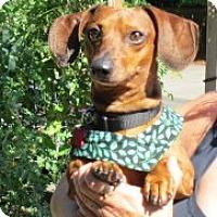 Adopt A Pet :: KAISER - Portland, OR