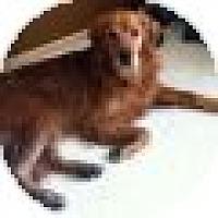 Adopt A Pet :: JuJu - Denver, CO