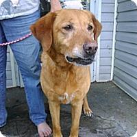 Adopt A Pet :: Jasmine - Hollis, ME