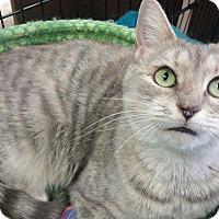 Adopt A Pet :: Skylark - Apex, NC