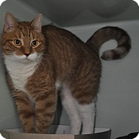 Adopt A Pet :: Comet - Rockaway, NJ