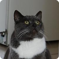 Adopt A Pet :: Dora - Toronto, ON