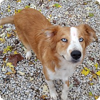 Adopt A Pet :: Jamie Fraser-MISSOURI - Wood Dale, IL