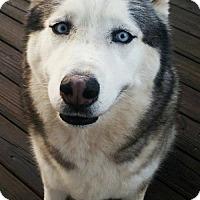 Adopt A Pet :: Koda - Adoption Pending - Congrats Alemany Family! - Hewitt, NJ