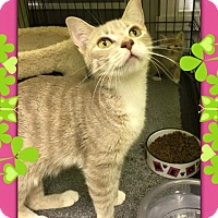 Adopt A Pet :: Helena - Atco, NJ