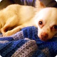Adopt A Pet :: Taco - Beavercreek, OH