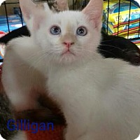 Adopt A Pet :: Gilligan - McDonough, GA