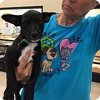 Adopt A Pet :: Parker - Hohenwald, TN