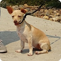 Adopt A Pet :: Scarlet - Lathrop, CA