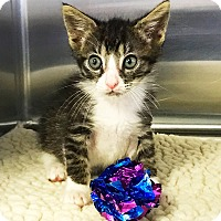 Adopt A Pet :: Luigi - Los Alamitos, CA