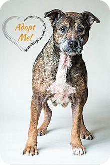 Shepherd (Unknown Type) Mix Dog for adoption in Midland, Virginia - Helda