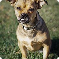 Adopt A Pet :: Grace - Holliston, MA