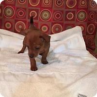 Adopt A Pet :: Avery - Powder Springs, GA