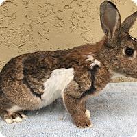 Adopt A Pet :: Tyler - Bonita, CA
