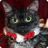 Adopt A Pet :: Belle - Encino, CA