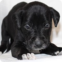 Adopt A Pet :: Barney - Chester Springs, PA