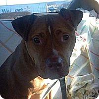 Adopt A Pet :: Kingston - Elderton, PA