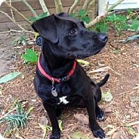 Adopt A Pet :: Gladys Knight - Houston, TX
