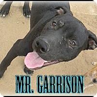 Adopt A Pet :: Mr. Garrison - Bakersfield, CA