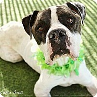 Adopt A Pet :: Peppercorn - Phoenix, AZ