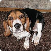Adopt A Pet :: Ally - Novi, MI