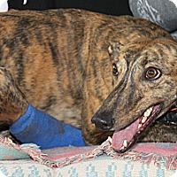 Adopt A Pet :: Lucy - Philadelphia, PA